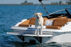 A labrador retriever dog standing on a boat.